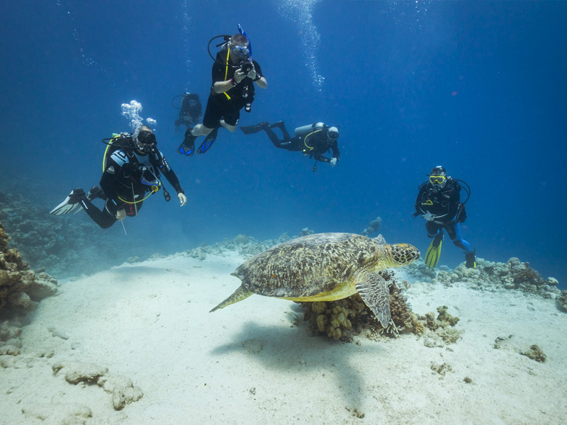 Welcome to Ducks Diving Superior | Marsa Alam